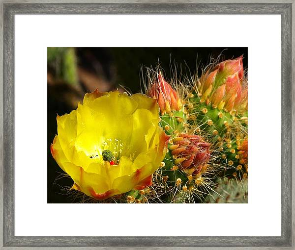 Silks Among Needles Framed Print