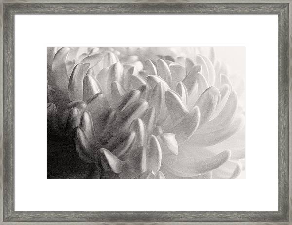 Ethereal Chrysanthemum Framed Print