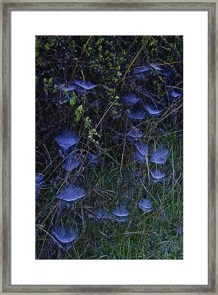 Spider Webs Framed Print