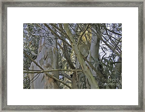 Eucalyptus Study Framed Print