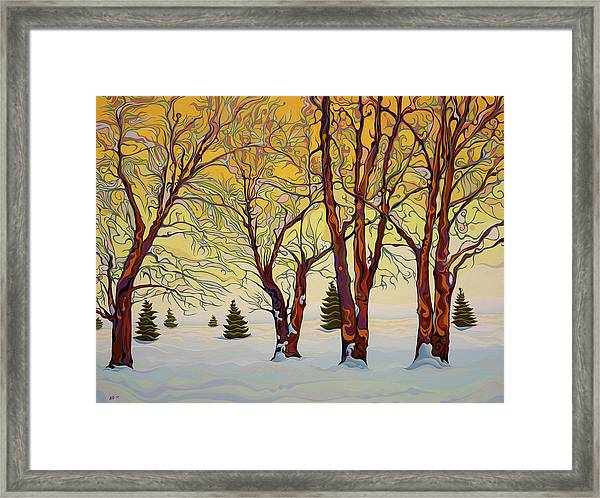 Euphoric Treequility Framed Print