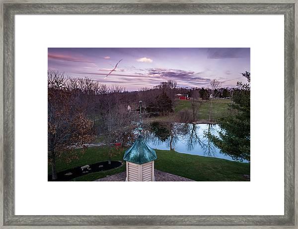 Evening Dove Framed Print