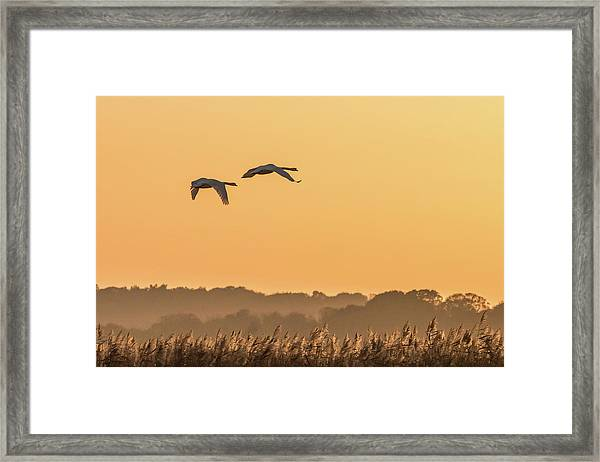 Evening Flight Home Framed Print