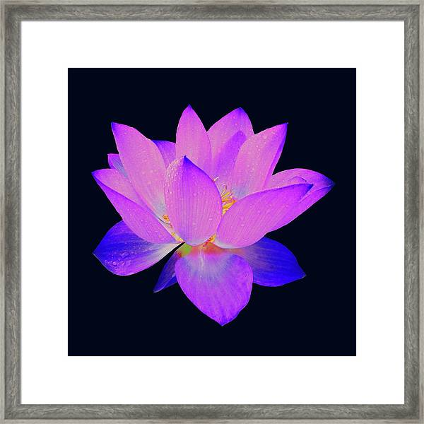 Framed Print featuring the painting Evening Purple Lotus  by David Dehner