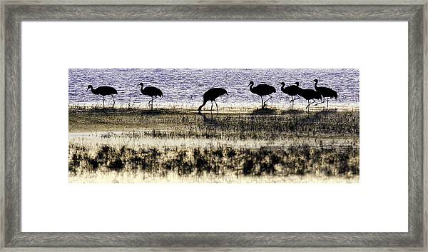 Evening Silhouette Framed Print