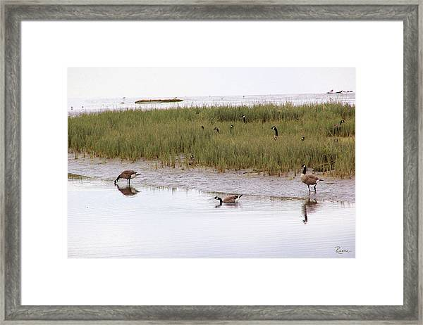 Evening Stollers Framed Print