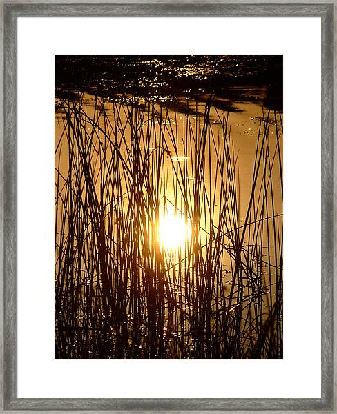 Evening Sunset Over Water Framed Print
