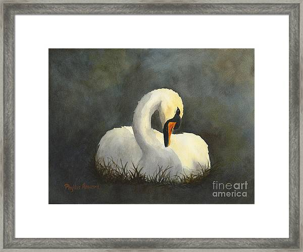 Evening Swan Framed Print