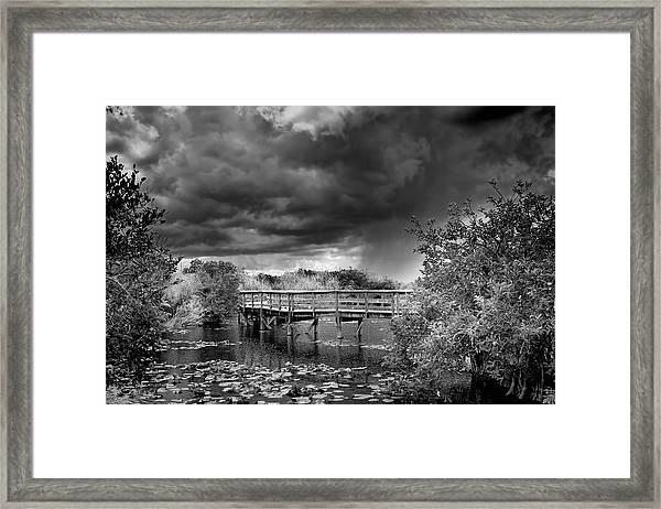 Everglades 0823bw Framed Print