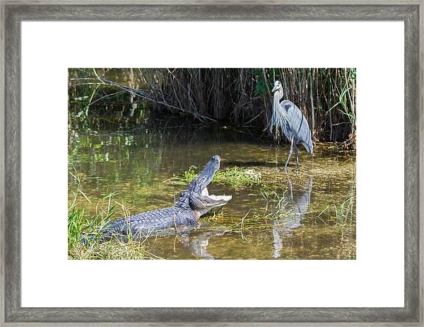 Everglades 431 Framed Print