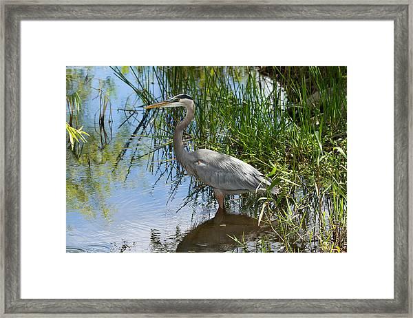 Everglades 572 Framed Print