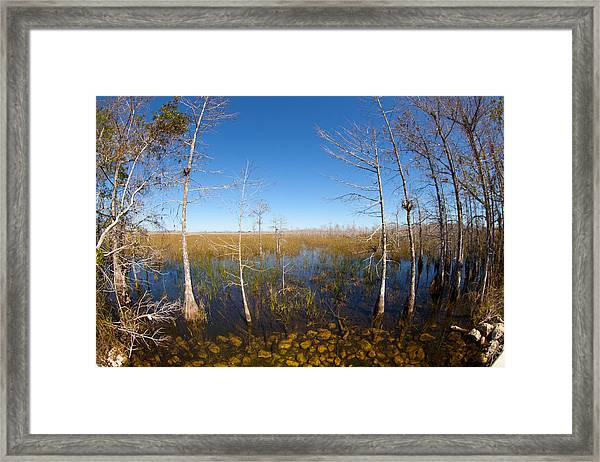 Everglades 85 Framed Print