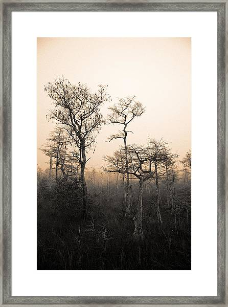 Everglades Cypress Stand Framed Print