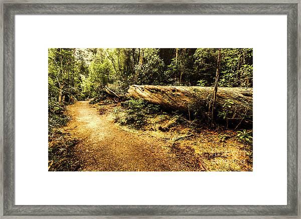 Evergreen Jungle Trails Framed Print