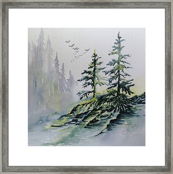 Evergreens In The Mist Framed Print