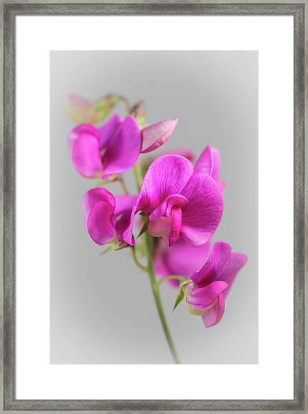 Everlasting 1 Framed Print