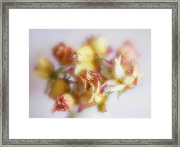 Everlasting Rose Buds Framed Print