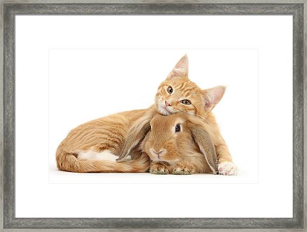 Everybody Needs A Bunny For A Pillow Framed Print