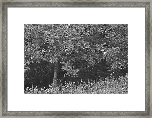 Everything Is Not Black And White Framed Print