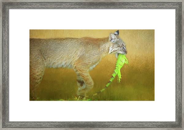 Exotic Lunch. Framed Print