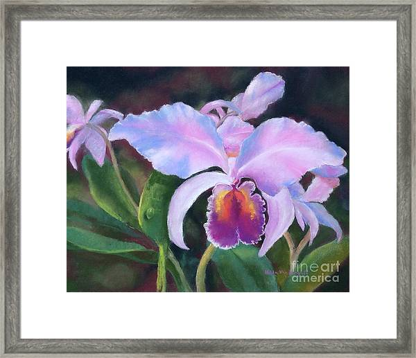 Exotic Pink Orchid Framed Print
