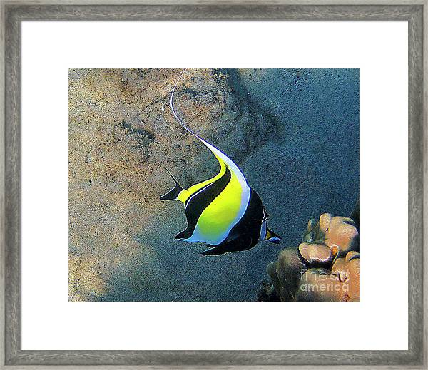 Exotic Reef Fish  Framed Print