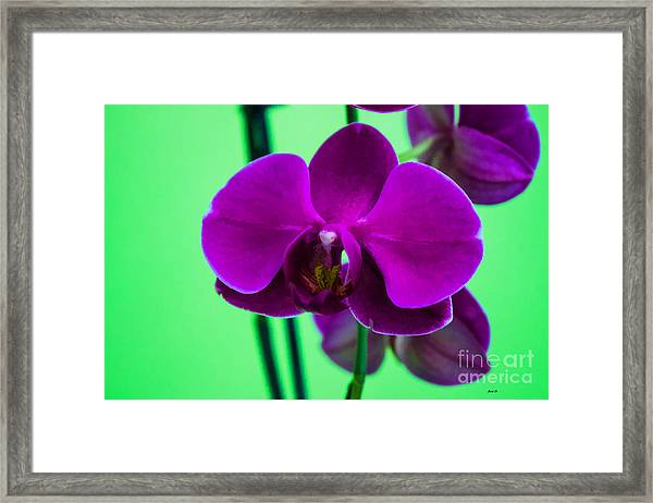 Exposed Orchid Framed Print