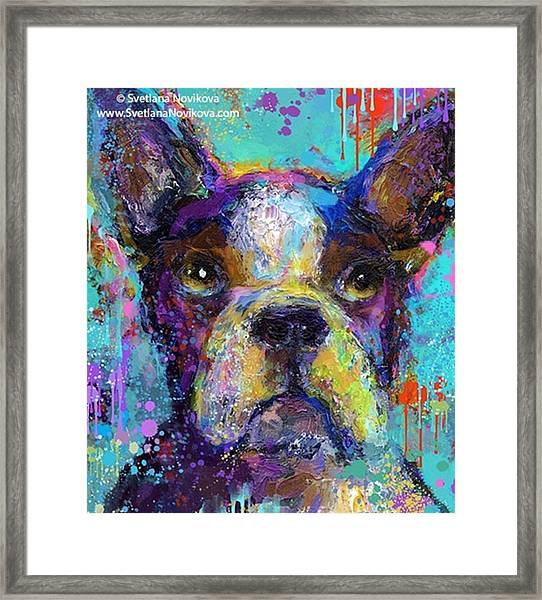 Expressive Boston Terrier Painting By Framed Print
