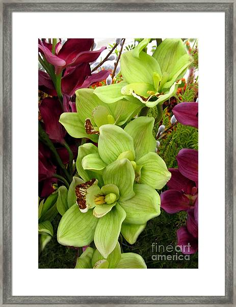Framed Print featuring the painting Expressive Botanical Orchids 715 by Mas Art Studio
