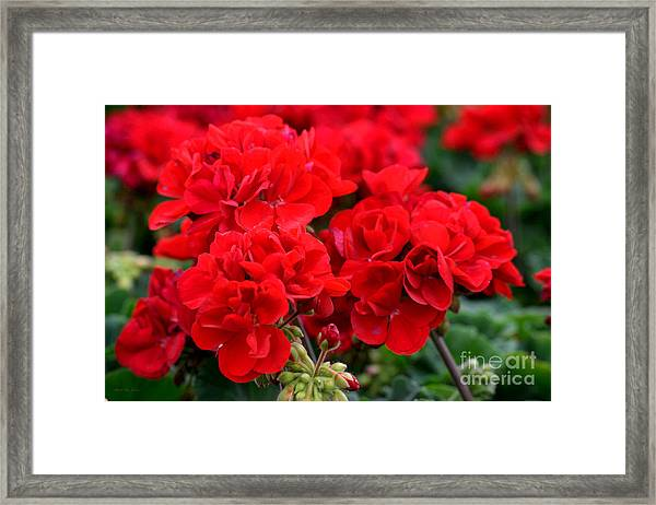Framed Print featuring the painting Expressive Floral Red Geraniums E131716  by Mas Art Studio