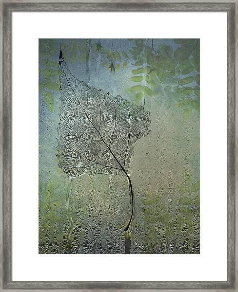 Expressiveness  Framed Print