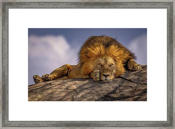 Eye Contact On The Serengeti Framed Print