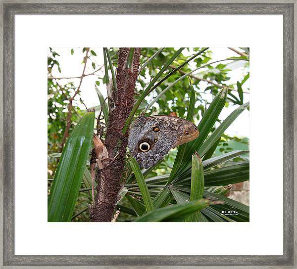 Eye Moros In La Costa Framed Print