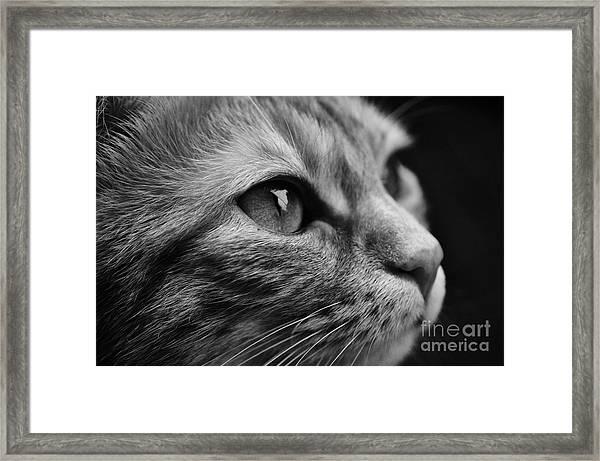 Eye Of The Cat Framed Print