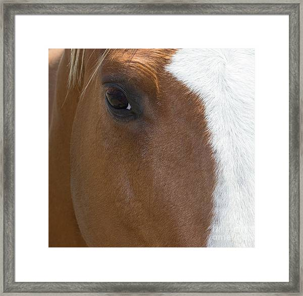 Eye On You Horse Framed Print