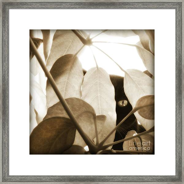 Framed Print featuring the photograph Eye Spy by Shevon Johnson