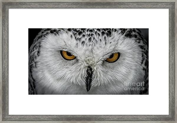 Eye-to-eye Framed Print