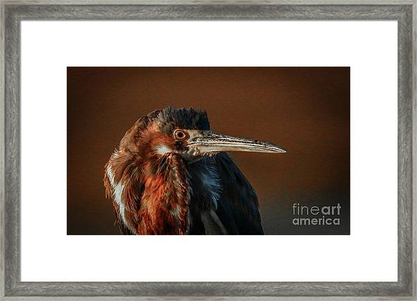 Framed Print featuring the photograph Eye To Eye With Heron by Tom Claud
