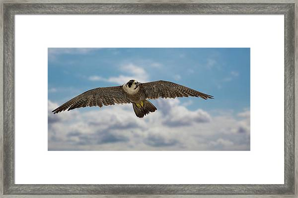 Eyes In The Sky Framed Print