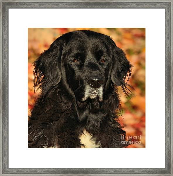 Eyes Of Autumn Framed Print