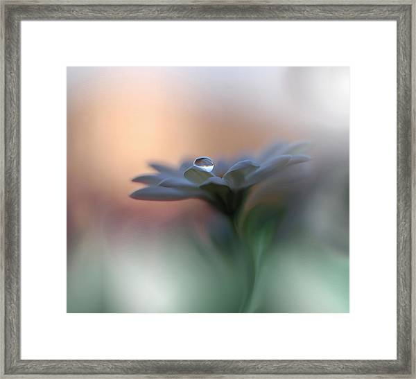 Eyes Of The Light Framed Print