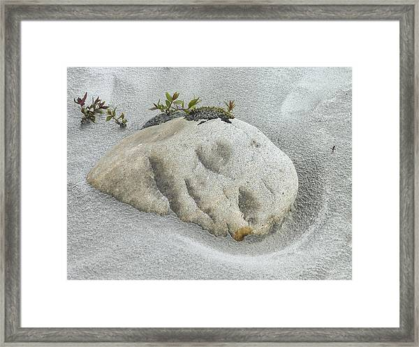 Face In The Sand At Baird Glacier Outwash Framed Print