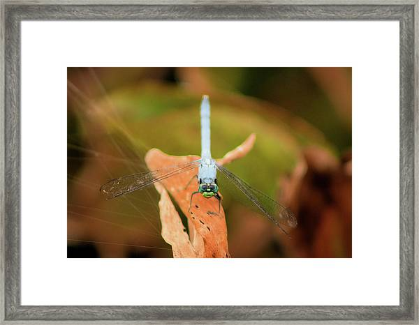Face Of The Dragon Framed Print