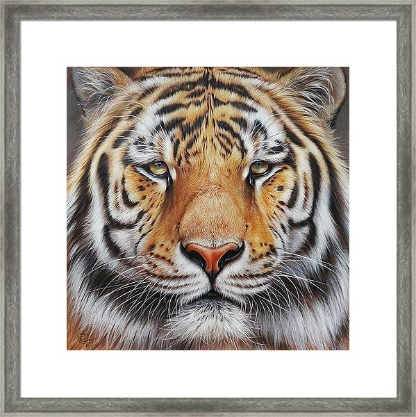 Faces Of The Wild - Amur Tiger Framed Print