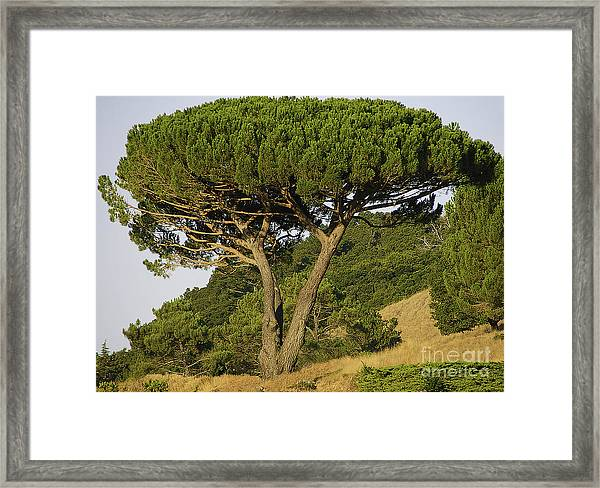 Fairfax Beauty Framed Print