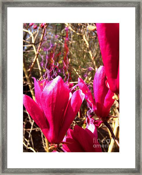 Fairy Fire Framed Print