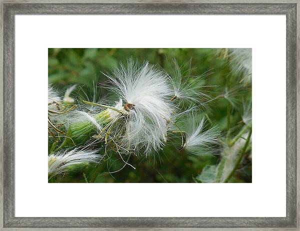 Fairy Flower Framed Print