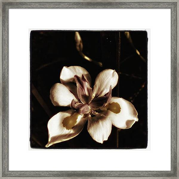 Framed Print featuring the photograph Fairy Iris. A Butterfly Landed On My by Mr Photojimsf