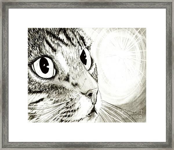 Fairy Light Tabby Cat Drawing Framed Print