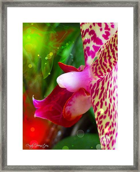 Fairy Orchid Framed Print